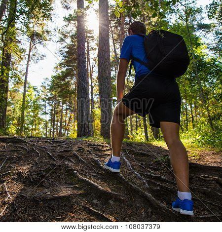 Hiking Concept - Back View Of Male Hiker With Backpack In Forest