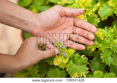 Nurturing Hands