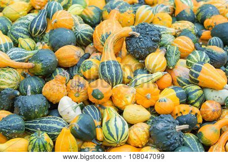 Different color pumpkins