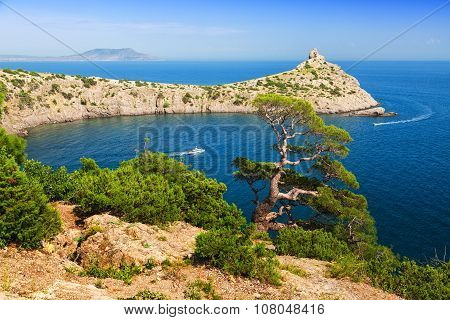 Beautiful Crimean Landscape With A Relic Juniper In The Foreground