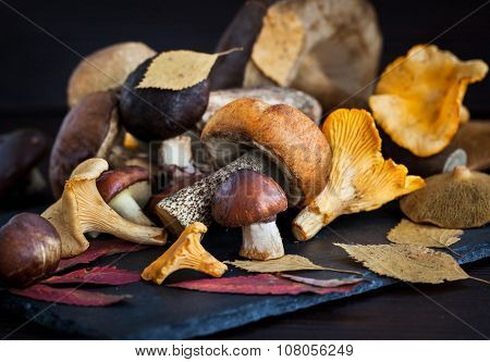 Mix Of Autumn Wild Forest Edible Mushrooms