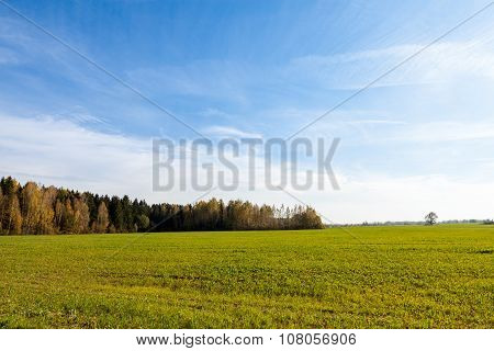 Agricultural Field And Forest In Autumn