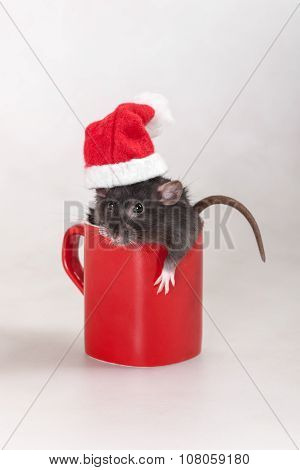 Rat In A Cap Of Santa Claus