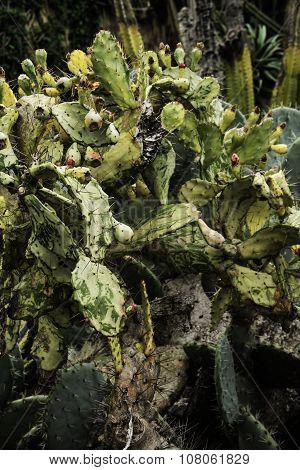 Prickly bush cactus