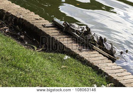 Tortoises Sunbathing