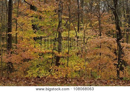 Autumn colors in forest.