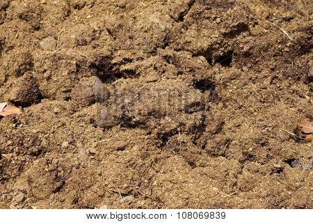 Natural Fertilizer From Cow Dung (cattle Manure).
