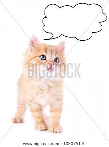 Kitten with empty cloud bubble above her head, isolated on white