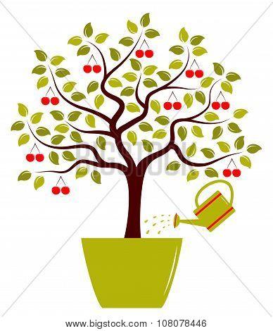 Cherry Tree In Pot
