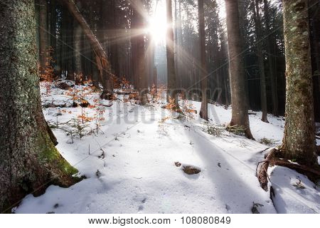 Rays of sun filtering through trees