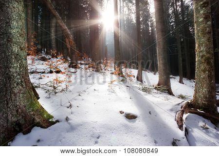Rays of sun filtering through trees