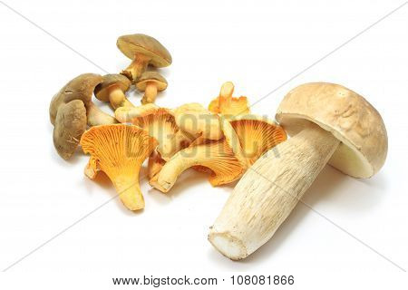 Edible Mushroom Isolated