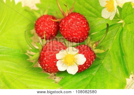 Wild Strawberry Fruits And Leaves