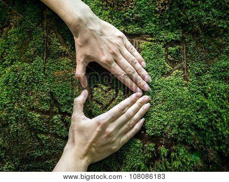 Woman's Hands Folded In Shape Of Heart