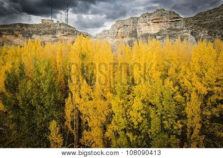 Yellow trees in autumn next to the mountain - Berlanga de Duero, Soria, Spain