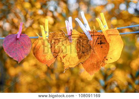 Colorful Autumn Leaves Hanging On The Leash
