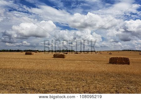 Squares Straw Bales After Harvest Wheat