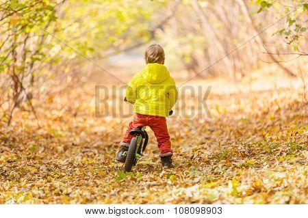 Little boy riding learner bike in autumn park
