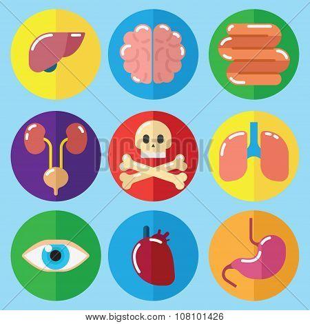 Anatomy Medical Care Health