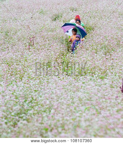 Minority ethnic kids are in buckwheat flower field on October 20, 2013 in Hagiang, Vietnam.