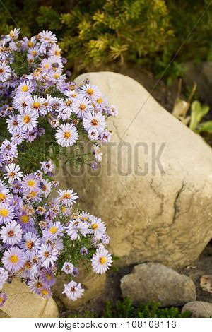 Decorative Perennial Flowers For Landscape Design