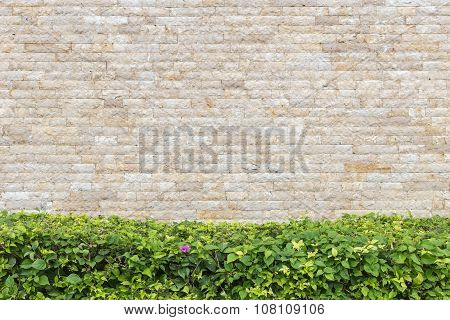 Beautiful Green Decorative Plant And Travertine Stone Wall Background