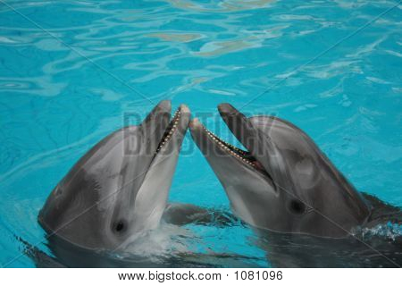 Bottle Nosed Dolphins