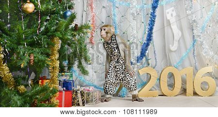 greeting card with monkey, numbers, gifts, decorations