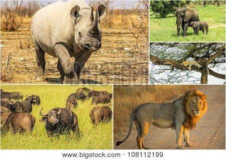 African Wildlife Landscape