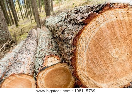 Freshly cut wood
