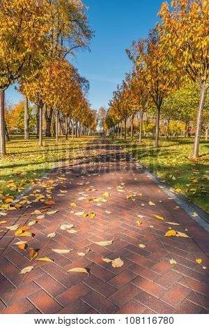 Beautiful alley in autumn park