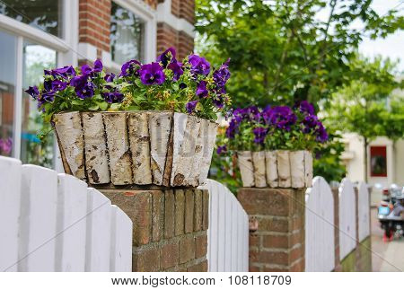 Traditional Street Decoration With Violets In Zandvoort, The Netherlands