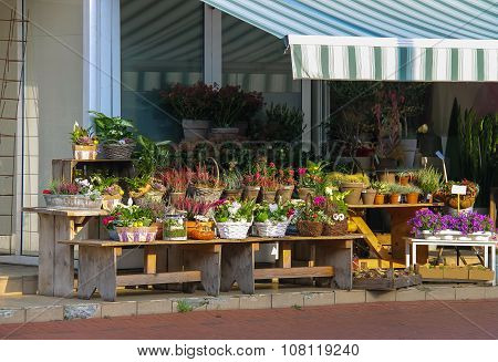 Baskets And Pots With Plants On The Wooden Benches In Front Of The Flower Shop In  Zwanenburg, The N