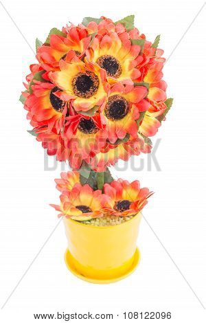 topiary sunflower isolated