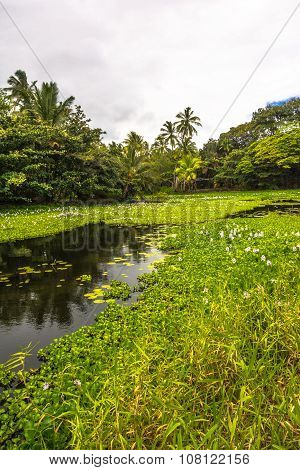 The pond of Spring Water in Big Island, Hawaii