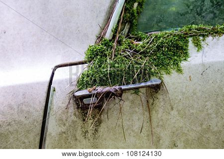 Moss Growing Over Old Car Handle