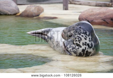 Grey Seal Eyes Closed