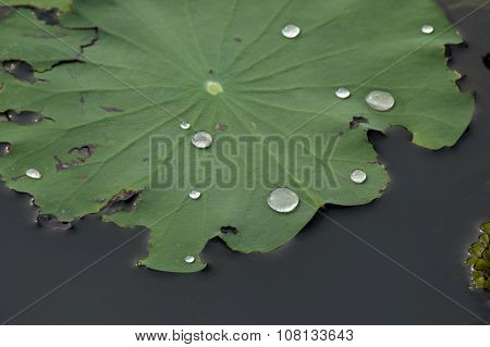 lily leaf flowers and flora of the world