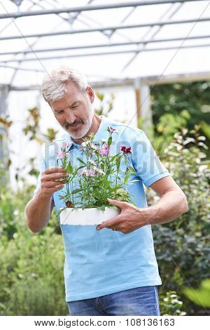 Male Employee At Garden Center Holding Plant