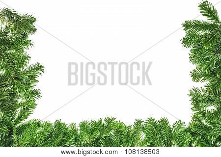 Green Branch Of Christmas Tree On The White Background