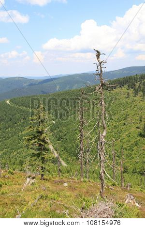 Czech Forest Country (jeseniky Mountains)