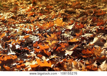Nature Autumn Background With Dry Fallen Leaves