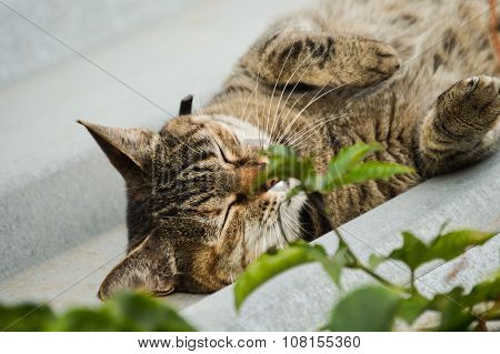 Cute grey housecat