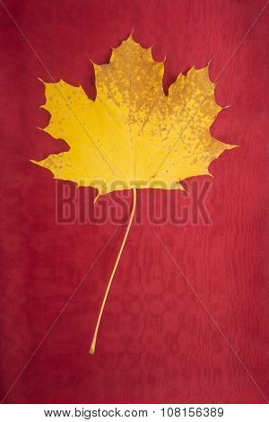 Yellow Maple Leaf on Red Fabric Background