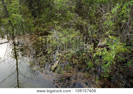 Plants in a Flooded Wetland