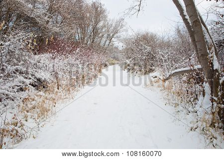 One The Winter Trail.