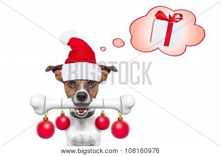 Dog With A White Bone  For Christmas Santa Claus