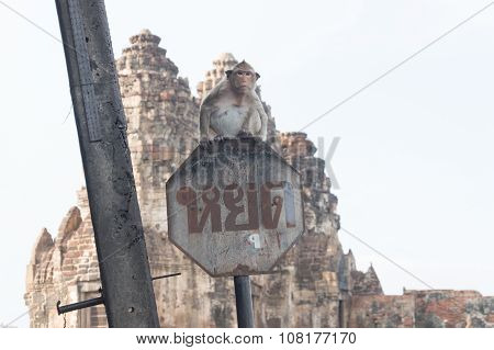 Monkey On Traffic Sign In Phra Prang Sam Yod,religious Ancient Khmer Art