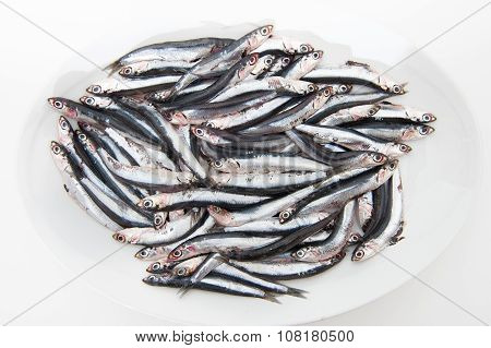 Plate Full Of Many Fresh Raw Anchovy