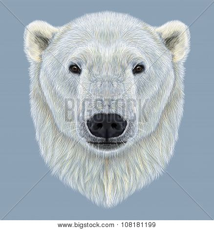 Illustrated Portrait of Polar Bear